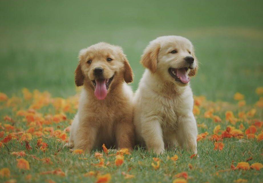 Dem Vierbeiner mit Hundefutter für Allergiker das schönste Leben schenken!