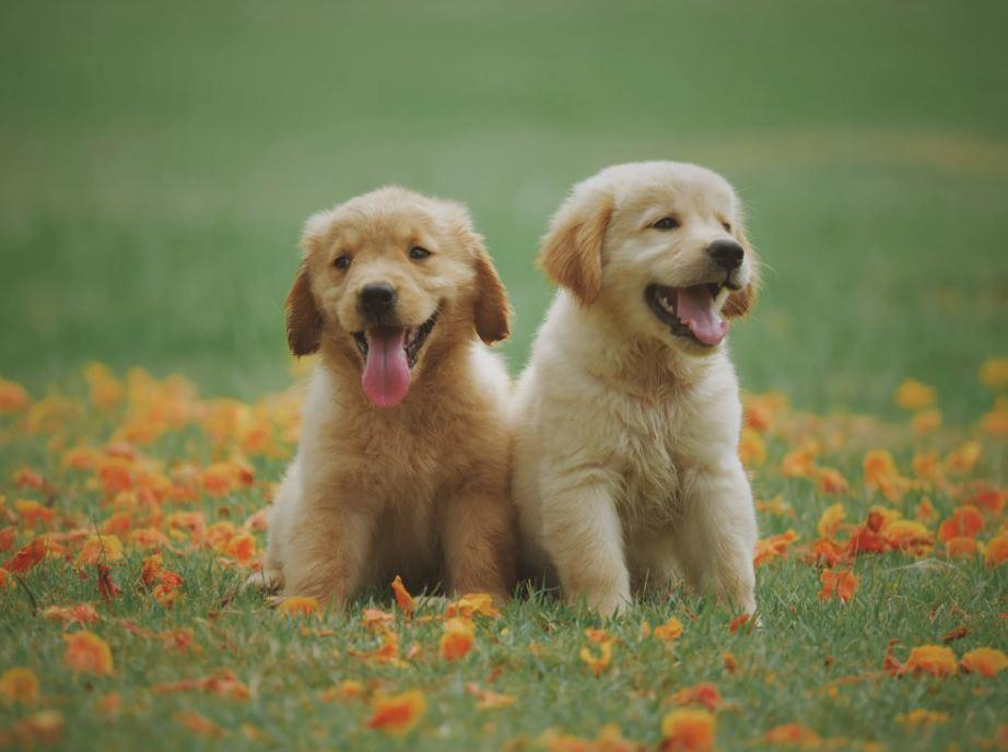 Read more about the article Dem Vierbeiner mit Hundefutter für Allergiker das schönste Leben schenken!