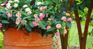 Read more about the article Schöne Pflanzkübel als Dekoration im Garten nutzen