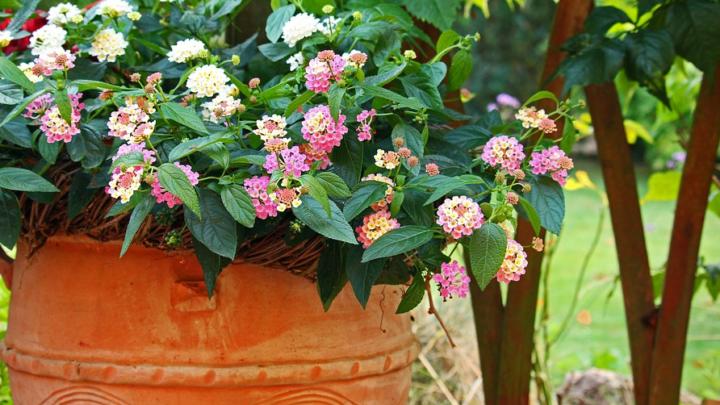 Schöne Pflanzkübel als Dekoration im Garten nutzen