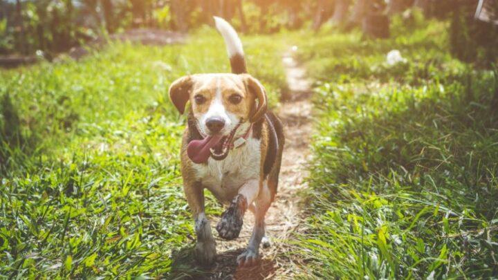 Genuss für den Hund – Futter in bester Qualität